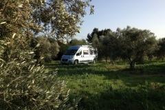 Olive-Grove-Marseille